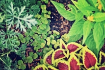 bits-of-the-garden