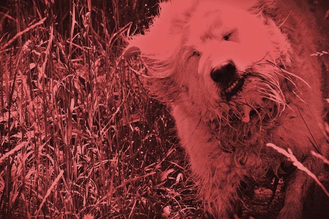 unicolor dog - thetemenosjournal.com