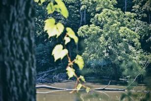 grape-vine-and-pond