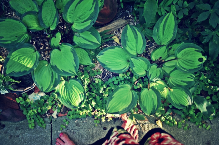 hostas at my feet - thetemenosjournal.com