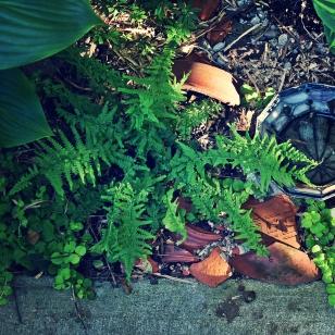 lady fern dipping fingertips in the water - thetemenosjournal.com