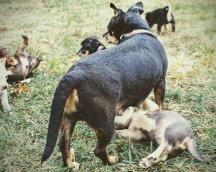 puppies-5