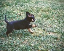 puppies-6