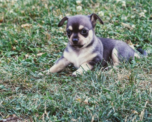 puppies-8