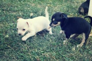 puppy's at play - thetemenosjournal.com