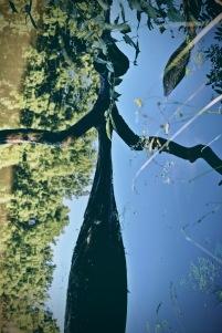 reflection-3