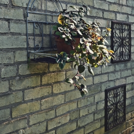 swedish ivy hanging on brick wall - thetemenosjournal.com