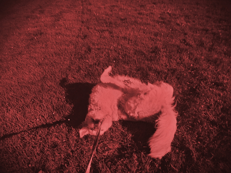 wag the dog in unicolor - thetemenosjournal.com