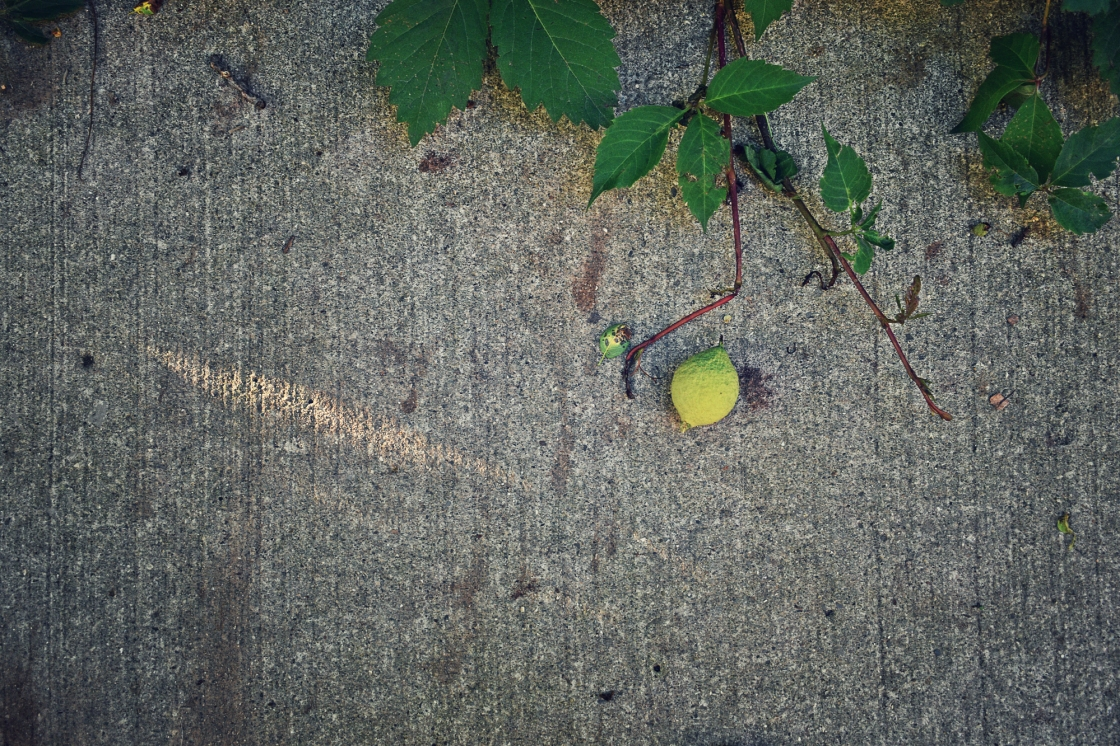 walnut on the sidewalk - thetemensojournal.com