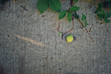 walnut on the sidewalk - thetemensojournal.com