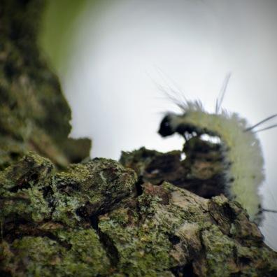 caterpillar - thetemenosjournal.com