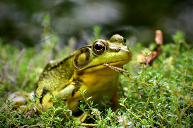 cool froggie - thetemenosjournal.com