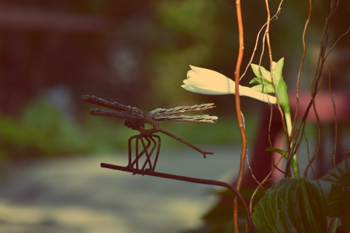hosta-bloom-and-dragonfly