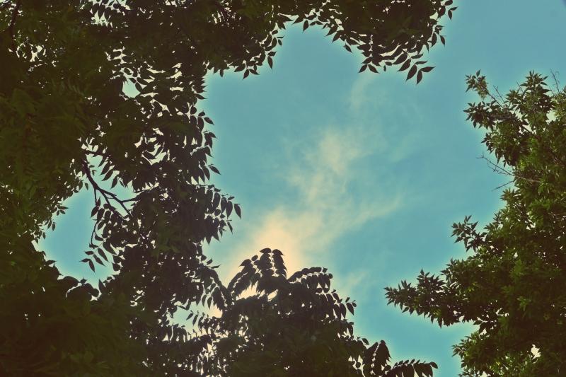 walnut-and-sky-shot