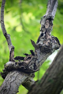 wooden-man-on-the-tree