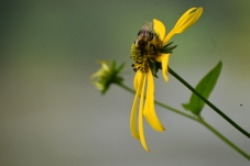 woodland sunflowers - thetemenosjournal.com