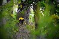 woodland-sunflowers-3