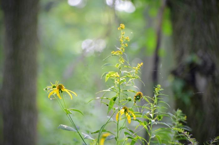 woodland wildflowers of august - thetemenosjournal.com