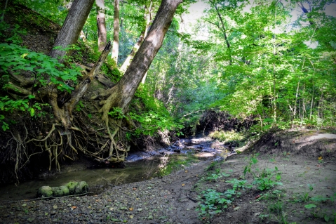 forest-stream-at-euston