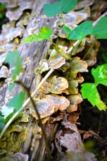 fungi-in-the-forest