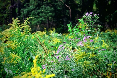 more-wildflowers-at-the-coves-trail