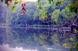 the-coves-pond-1