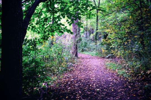 the-coves-trail-september-2018
