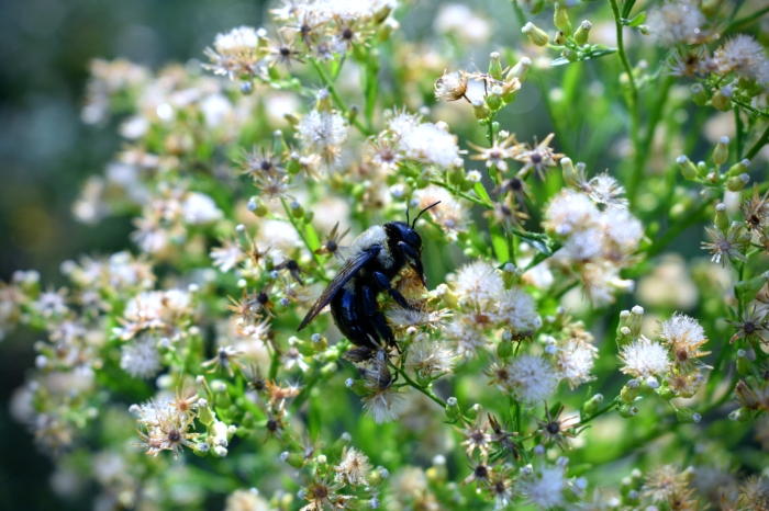 till the last drop - bumblebee - thetemenosjournal.com