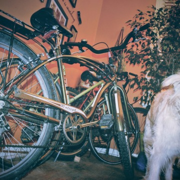 Dog With A Collection Of Bikes - thetemenosjournal.com