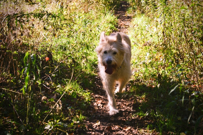 Doggy In The Orchard - thetemenosjournal.com