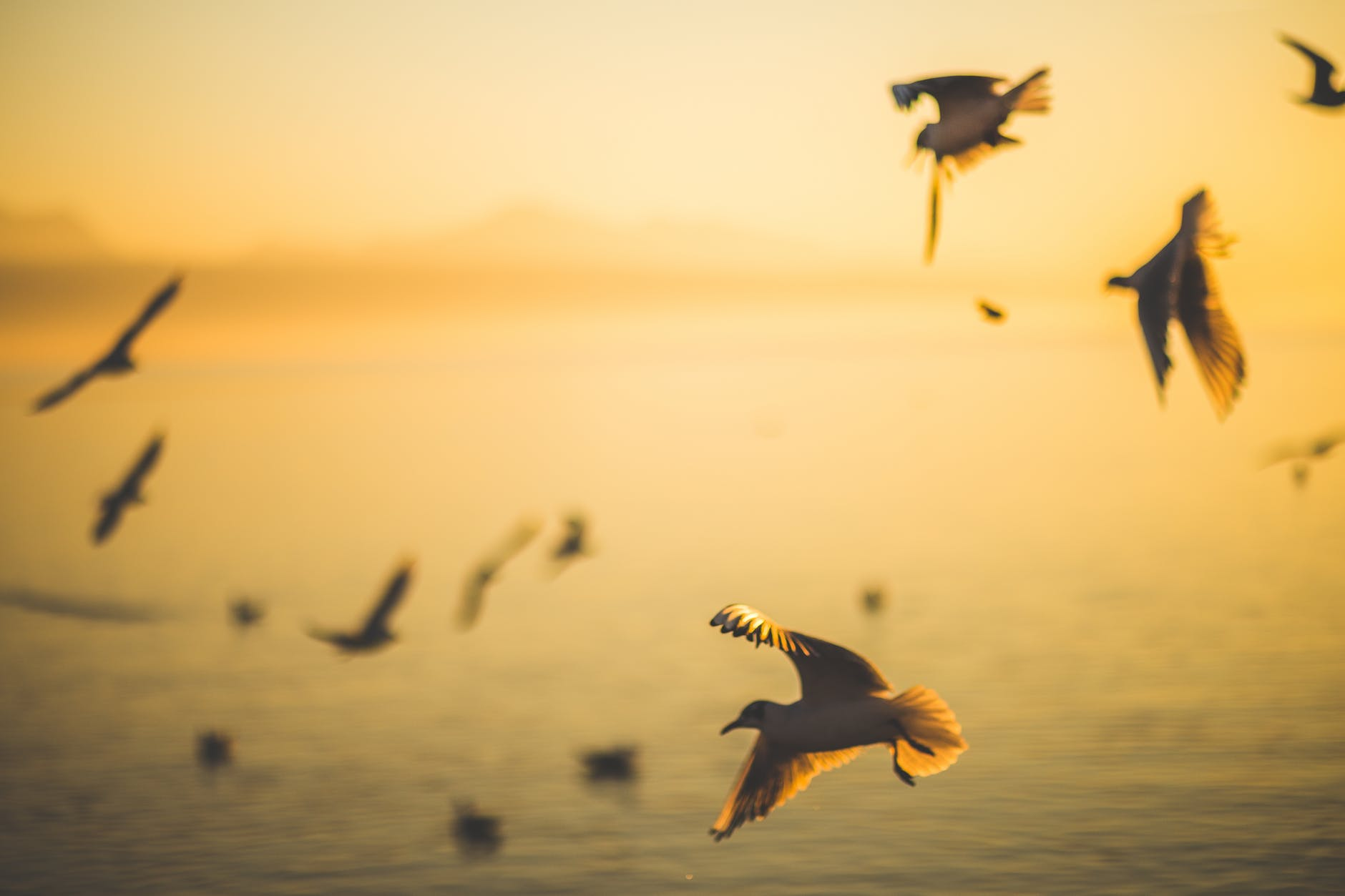 white seagul