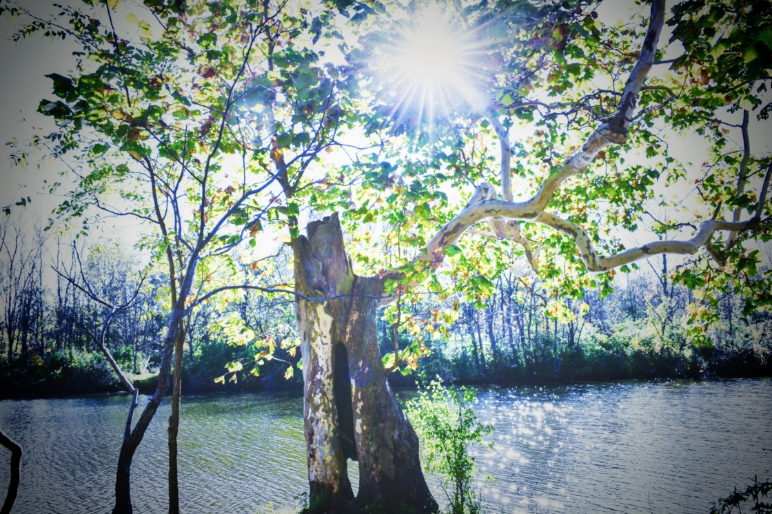 Sycamore At The East Pond - The Coves - thetemenosjournal.com