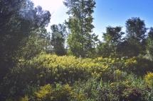 Euston Meadow - London, Ontario, Canada - thetemenosjournal.com
