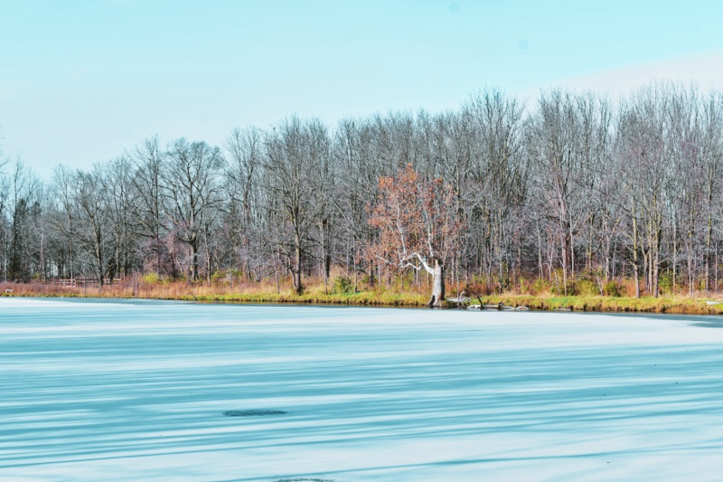 east pond at the coves - London, Ontario, Canada - thetemenosjournal.com