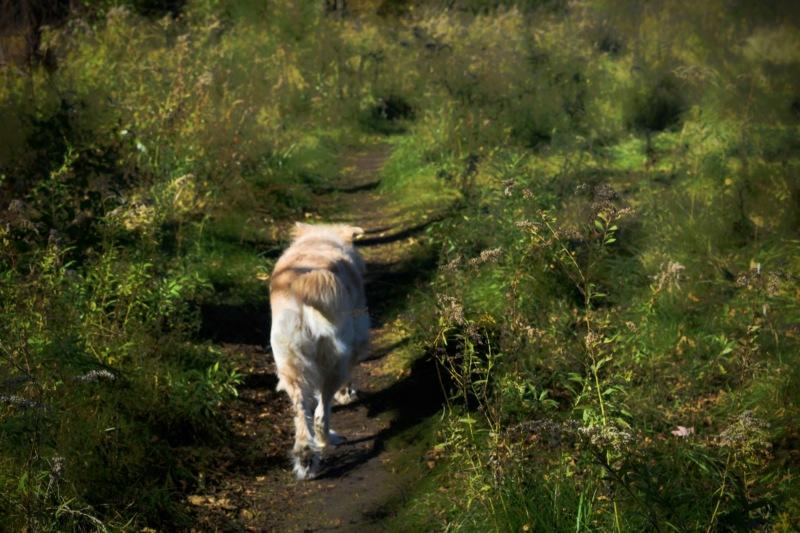 dog on a path - follow me - thetemenosjournal.com