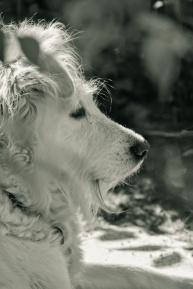 doggie in profile