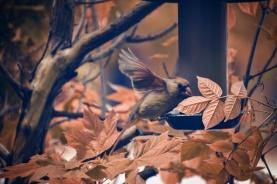 feed the birds 1