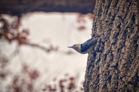 feed the birds 3