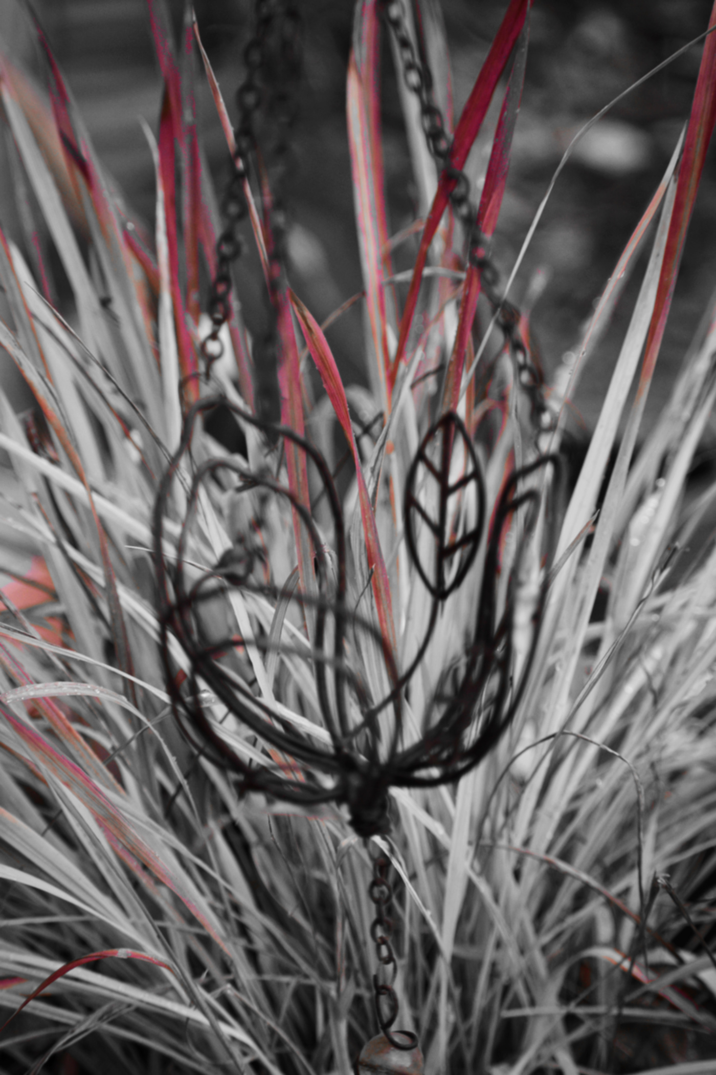 japanese blood grass in red white and black - thetemenosjournal.com