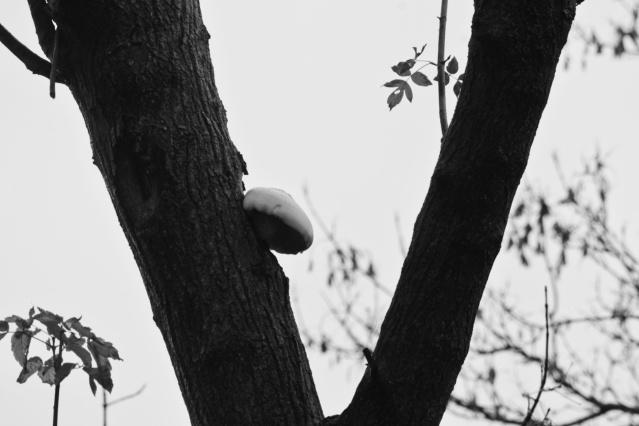 mushroom growing on a tree - the temenosjournal.com