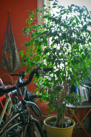 my bicycle collection with Fred the ficus - thetemenosjournal.com