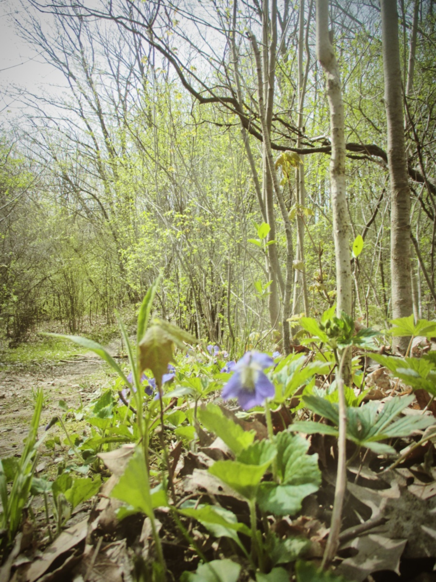 Spring at Euston Forest - thetemenosjournal.com