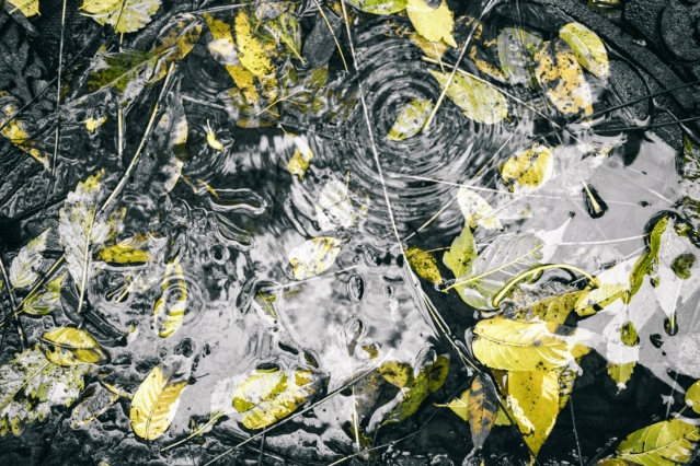 ripples in a puddle with leaves - thetemenosjournal.com
