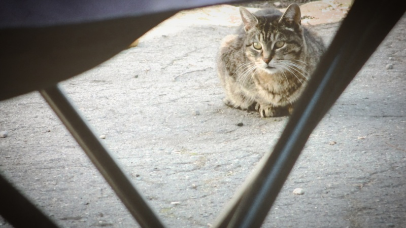 cat in the driveway waiting - thetemenosjournal.com