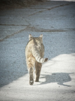 tabby cat walking away - thetemenosjournal.com