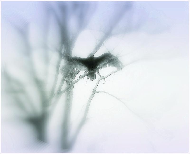 turkey vulture on back road - 2011