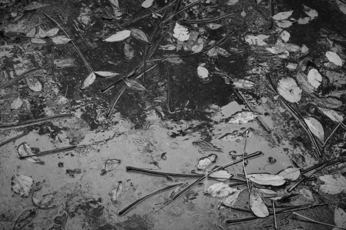 wet sidewalk and fall leaves in black and white