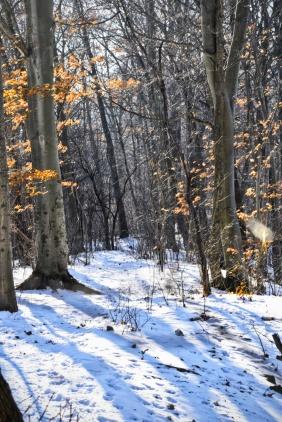 Euston Woods - London Ontario - thetemenosjournal.com