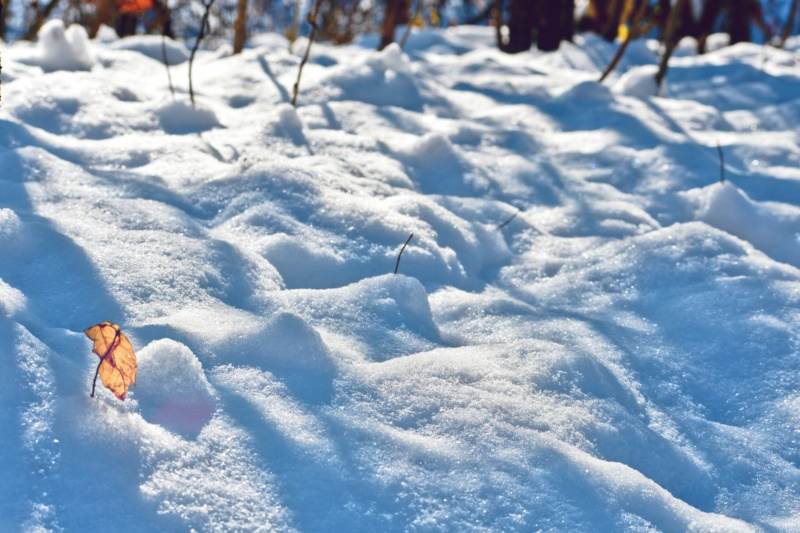 snowy landscape with golden leaf - thetemenosjournal.com