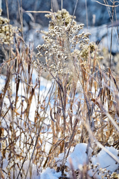 dried grasses in winter - thetemenosjournal.com